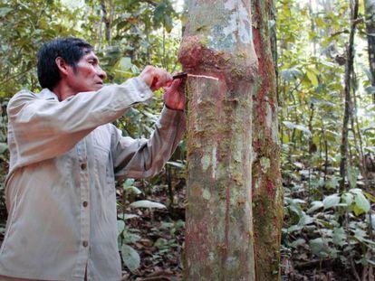 Los indígenas son cruciales para la conservación de la Amazonía.