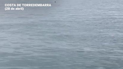 Tiburones avistados en la costa catalana