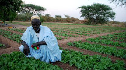 El agua llegó a la casa de Usman Ndiaye en el año 94, fue de los pocos varones que decidió quedarse en su pueblo.
