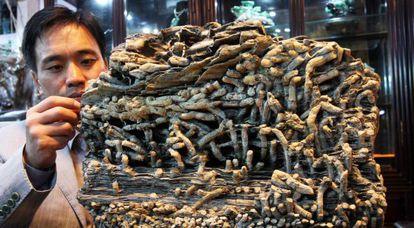 Fósiles de lombrices del periodo cámbrico.