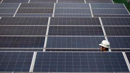 Un técnico observa varios paneles de energía solar.