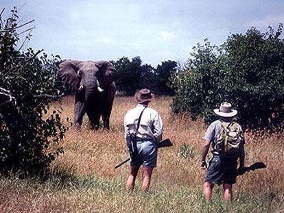 Dos guías de safari, ante un magnífico ejemplar de elefante en Kenia.