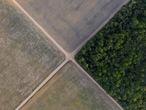 Vista de un trozo de selva amazónica junto a campos de soja, en el estado de Pará (Brasil), en noviembre de 2019.LEO CORREA / A