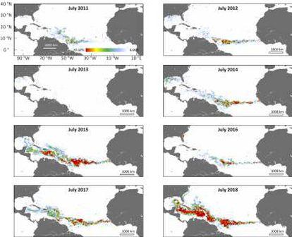 Evolución del nuevo mar de sargazos en julio, el mes de su mayor expansión.