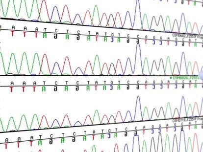 Código genético en la pantalla de un ordenador