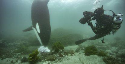 El fotógrafo Brian Skerry ve la caza de orcas en un documental