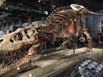El enorme tiranosaurio que puede verse en Cosmocaixa de Barcelona.