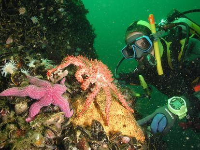Häussermann explora la diversidad marina de los fiordos de la Patagonia chilena.