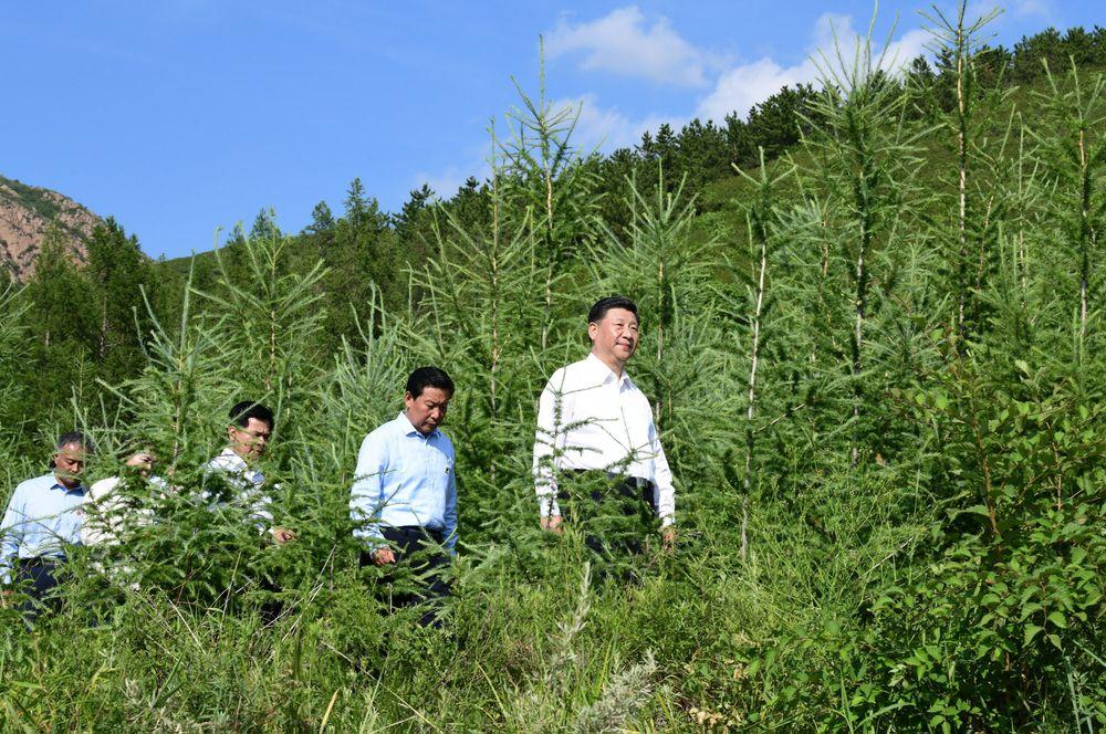 El presidente chino, Xi Jinping, visita un bosque en Mongolia en julio de 2019.