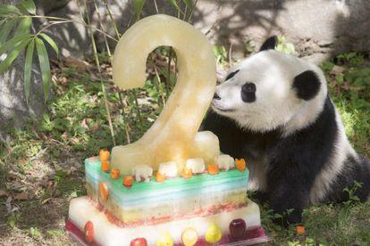 Bao Bao, cumple dos años em el Zoológico Nacional en Washington
