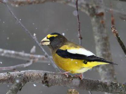 En Europa y Norteamérica han desaparecido hasta la mitad de las aves más comunes en las últimas décadas