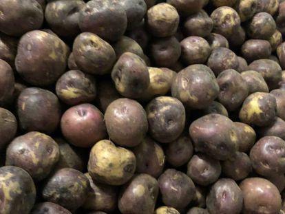 Una cosecha de algunas azucenas negras.