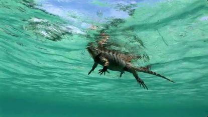Una iguana nadando en el mar.