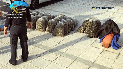 Bolsas con una de las partidas de almejas tóxicas decomisadas en Cantabria.