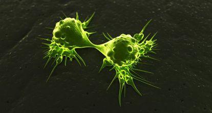 Células cancerígenas dividiéndose