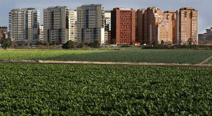 Parcelas de huerta en producción en la partida de Dalt del barrio de Campanar en Valencia.