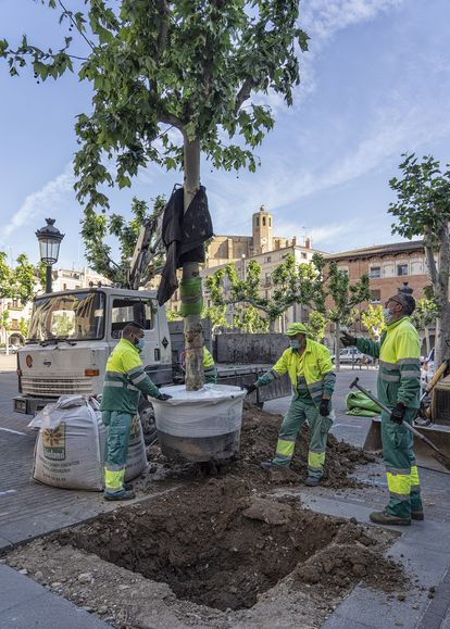 Plaza Mercadal, en Balaguer, donde se lleva a cabo el programa de replantantación de árboles de Ecoembes.