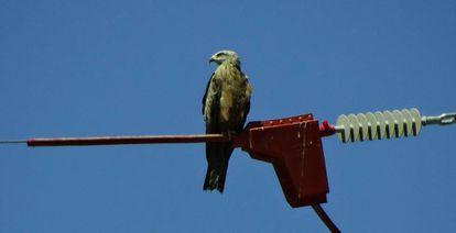 Un halcón en una estructura adaptada.
