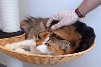 Un gato en adopción descansa en un centro de acogida de animales abandonados en Perwez (Bélgica).