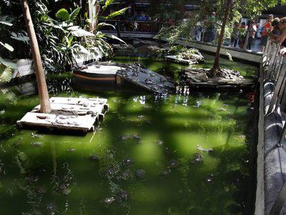 Tortugas en el estanque de la Estación de Atocha de Madrid.