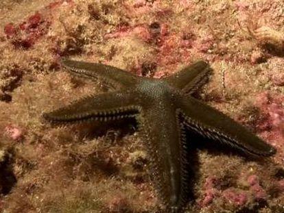 Sumergidos en el mar se observa que, aunque el paisaje es el mismo, de noche hay una variación del comportamiento de los animales