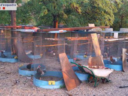 Jaulas en las que se encontraban encerrados los gallos de pelea.