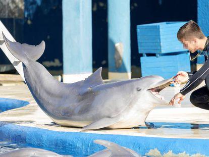 Un adiestrador, con uno de los delfines del zoo de Madrid.