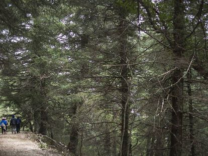 Parque Natural de la Sierra de Grazalema.