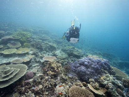 Proceso de blanqueamiento de la Gran Barrera de Coral de Australia.