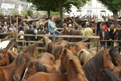 Feria caballar en la fiesta de As San Lucas de Mondoñedo