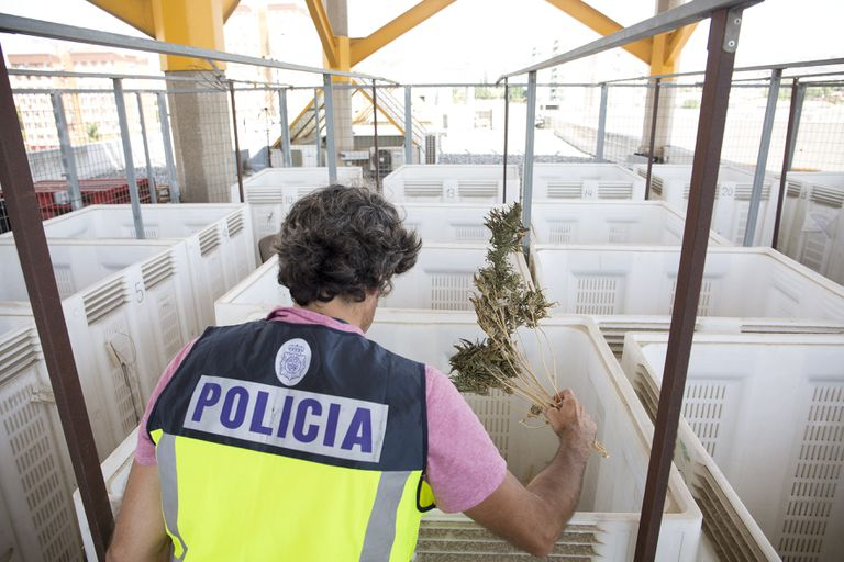 Un agente de la Policía Nacional trabaja en el espacio reservado para el secado de la marihuana en la comisaría de Málaga.