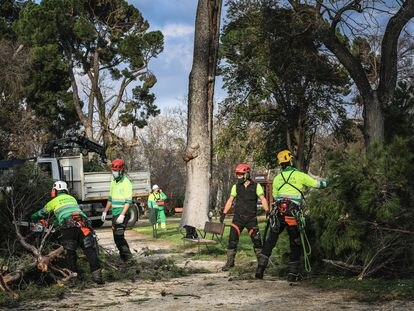 Varios operarios realizan trabajos de supervisión de árboles en El Retiro, en Madrid (España) a 4 de febrero de 2021.