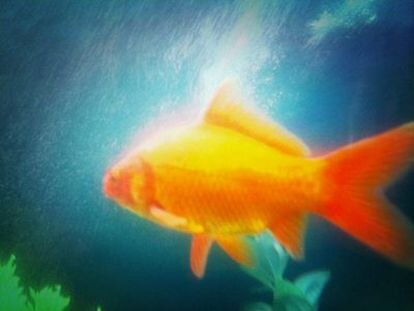 Millones de peces viven entre la basura, sobre todo plásticos, que se acumula día a día en los océanos.