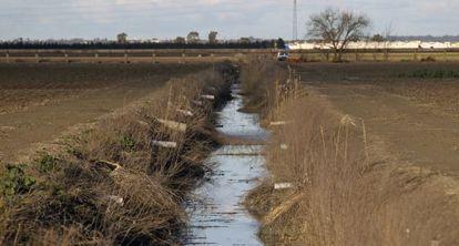 Obras para modernizar la red de riego en las marismas del Guadalquivir.