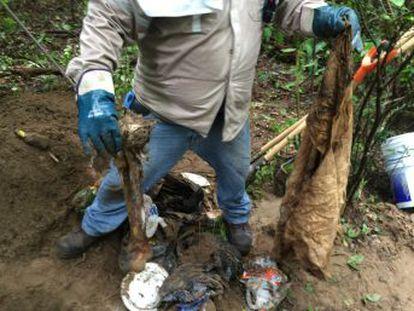 El Colectivo Solecito, en México, ha encontrado 75 fosas clandestinas en Veracruz. EL PAÍS les acompaña en la búsqueda