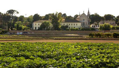 A la izquierda, parte de la zona arbolada objeto del litigio con el Ayuntamiento.