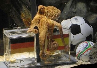 El pulpo Paul se decanta por España como finalista