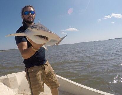 Bryan Keller sujeta un tiburón cabeza de pala.