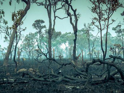 La selva tropical del Amazonas, el ecosistema más rico de la Tierra, destruido tras los incendios