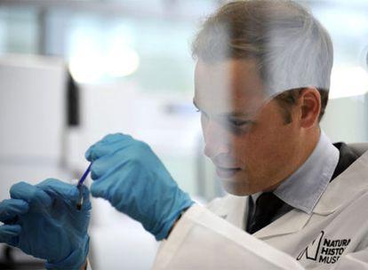 El príncipe Guillermo extrae ADN de un mosquito.