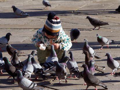 Un niño da de comer a un grupo de palomas en Pontevedra que este viernes presenta un tiempo primaveral.