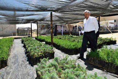 El presidente Andrés Manuel López Obrador, en uno de los viveros del programa 'Sembrando Vida' en Perote, Veracruz.