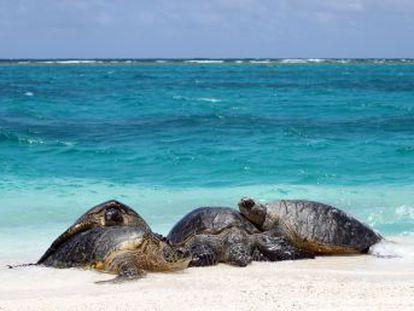 Un estudio en la Gran Barrera de Coral enciende las alarmas sobre los efectos del cambio climático