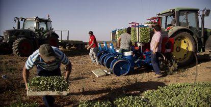 Agricultores afectados por el veto ruso a productos europeos, en una finca de Villamanrique de la Condesa (Sevilla).