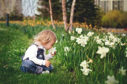 Un niño huele varios narcisos en un jardín.