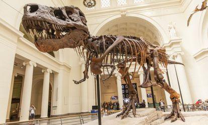 Esqueleto de tiranosaurio rex expuesto en el museo Field de Chicago.
