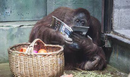 'Sandra' con una revista junto a la cesta de su comida.