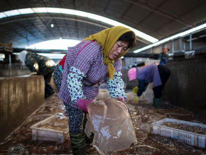 Hombres y mujeres vestidos con altas botas de goma y guantes llenan tanques de hormigón con sal y alumbre, donde las medusas se dejan durante una semana en remojo. Este proceso hace que la piel se pueda quitar con facilidad. En la imagen, la fábrica de salmuera de Xianrendao.