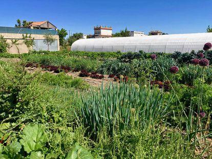 El navazo Cultivo Desterrado con su invernadero / Capel