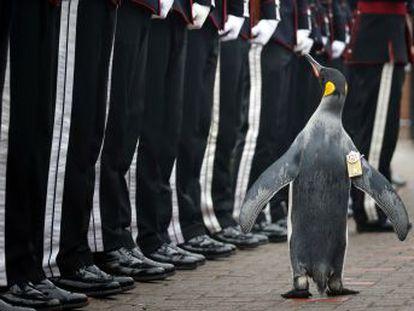 Sir Nils Olav  vive en el zoológico de Edimburgo y pertenece a la Guardia Real del país nórdico desde 2008